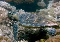 /album/zanzibar-i-pod-hladinou-je-na-co-koukat/a21-dive-mnemba-hawksbill-turtle%ef%80%a5-jpg/